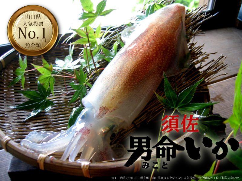 山口県人気ナンバー1魚介類「須佐男命いか」